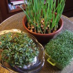 ser twarogowy z zielonymi witaminami