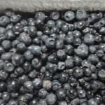 czarne jagody - smaczne i zdrowe
