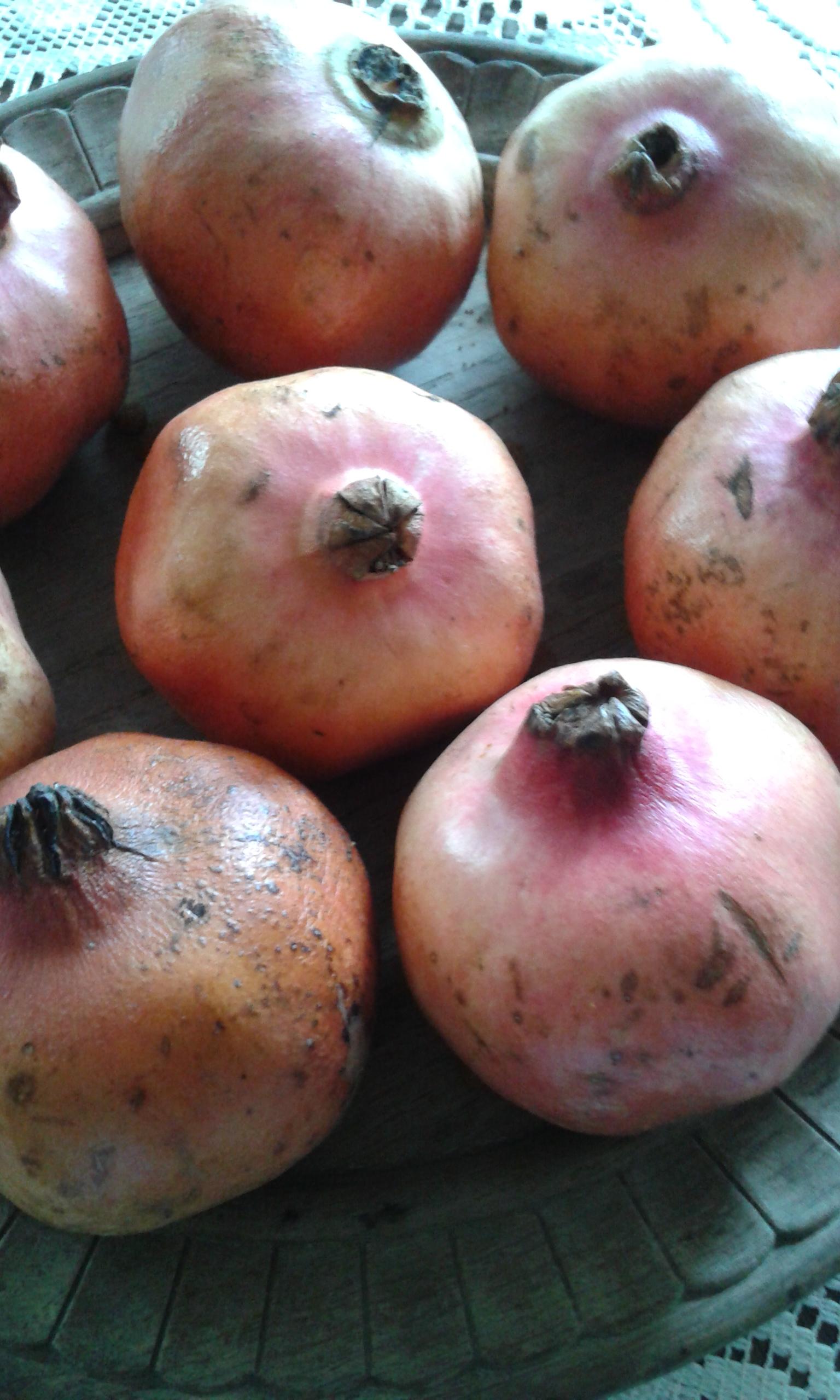 granaty owoce młodości i płodności